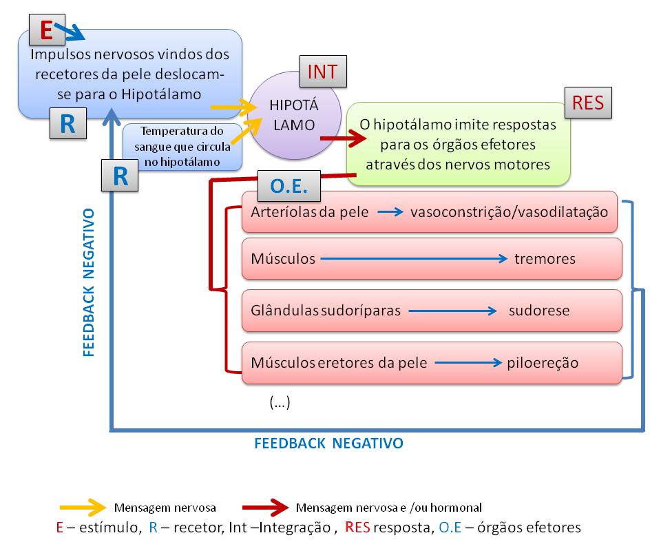 Termorregulacion Pdf